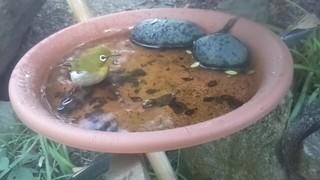 201911070809Kurashiki-BirdBath-meji_Moment.jpg