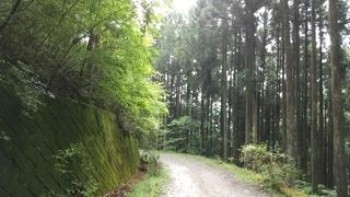 大丹波川2.jpg