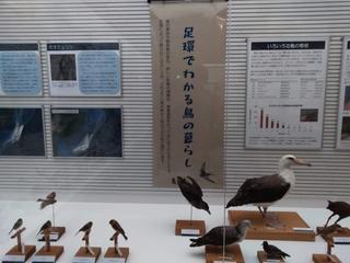 我孫子市鳥の博物館.jpg