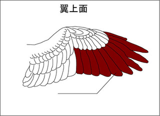 wing (1).jpg