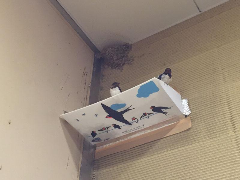 受け 巣 ツバメ の フン