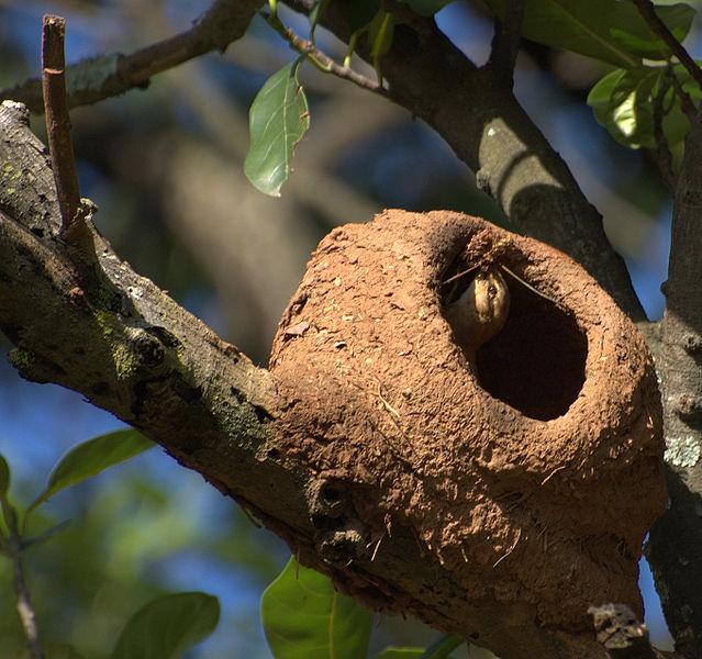 の 壊す ツバメ 巣