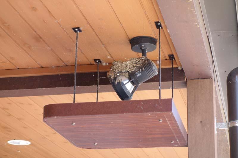 ツバメ の 巣 フン 受け つばめの巣ができた時の糞(フン)対策~我が家にかわいい居候が増え...