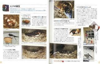 swbook_P7.jpg